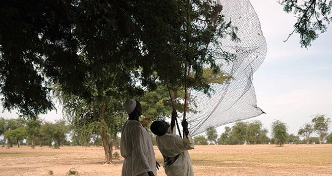 Redes para pájaros. Foto: C.Pluma / Intermón Oxfam