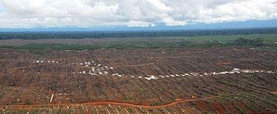 Selva talada para producir aceite de palma al norte de Perú.