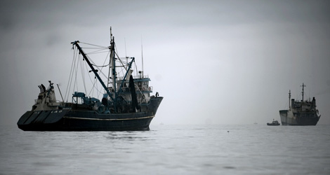 España solicita la pesca de anchoa en el Golfo de Vizcaya, prohibido desde 2005. | Afp