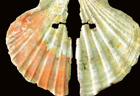 Pigmentos en las conchas que los neandertales usaban para decorarse. | PNAS