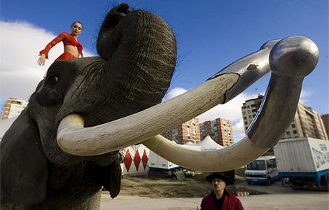 Mambo, el elefante que aplastó la pierna a l domadora, con su hija.   Roberto Cárdenas