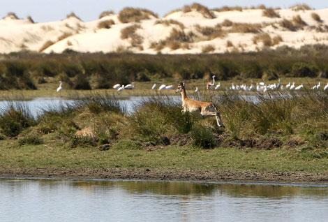 Laguna de Santa Olalla, en Doñana. | Eduardo Abad
