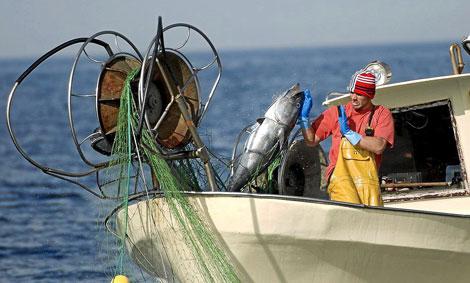 Un trabajador de un pesquero ilegal recupera un atún en el Mediterráneo. | OCEANA