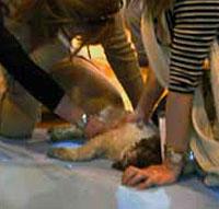 El perro yace muerto en el suelo.| El Refugio