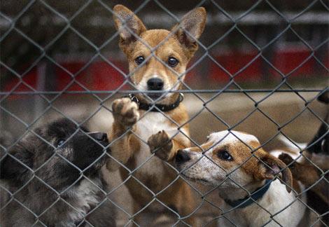 Varios perros, en una residencia de Kloten (Suiza). | AP