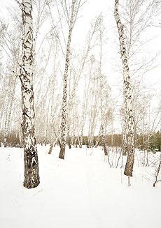 Los árboles no protestan cuando les saco fotos | J.C.C.
