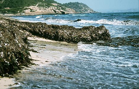 Una playa del Mediterráneo. | I. Vega