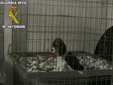 Algunos de los cachorros encerrados en la perrera ilegal en Cáceres. | Guardia Civil
