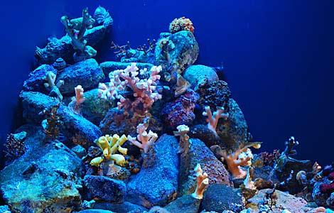 Los corales, una de las especies más dañadas. | CSIC