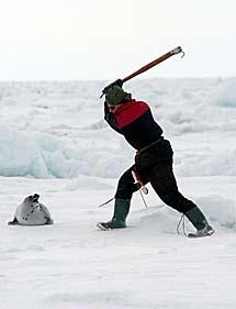 Un cazador de Québec en 2004. | IFAW