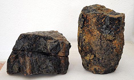 Alguno de los fósiles descubiertos. | A.E.