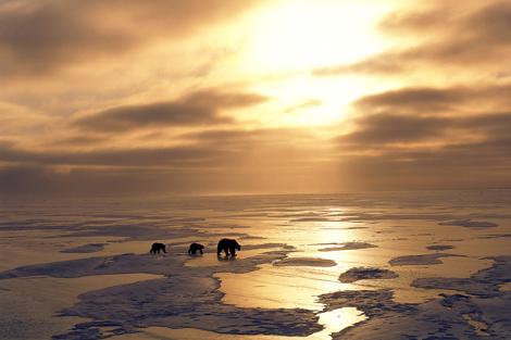 Una osa polar y sus crías, en el Ártico. | Fotograma del documental 'Tierra' (BBC).