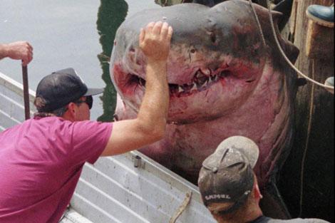 Dos pescadores estadounidenses muestran a un gran tiburón blanco. | Ap