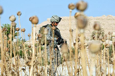Un soldado estadounidense pasea por un campo de amapolas en Afganistán. | Efe