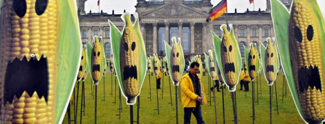 Protesta de Greenpeace contra el maíz transgénico.   Afp
