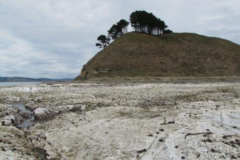 Plataforma marina elevada en el sur de Chile debido al terremoto. | Science
