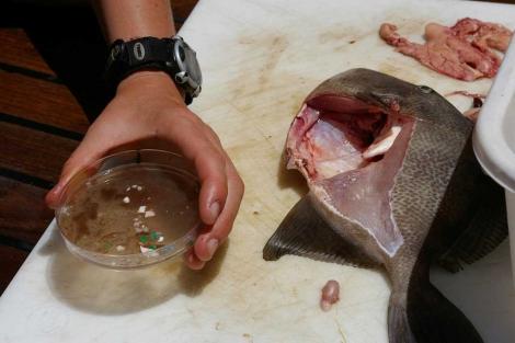 Basura plástica encontrada en el interior de un pez.|'Science'