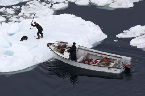 Caza de focas el primer día de campaña 2010 en Canadá. | AFP