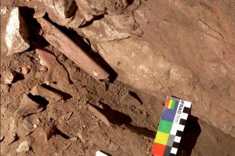 Fósiles de 'Homo sapiens' del Paleolítico encontrados en El Mirón.|Efe