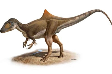 Reproducción hipotética del Concavenator corcovatus.   Raúl Martín