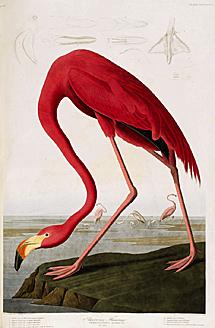 Una ilustración de 'Aves de América'. | Efe