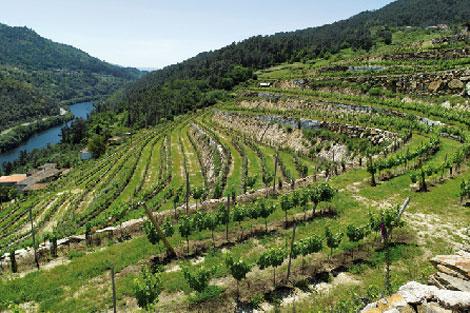 Ribeira Sacra Un Modo De Vida Galicia Elmundo Es