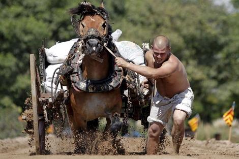 Un hombre tira del caballo durante el concurso de tiro y arrastre | Efe