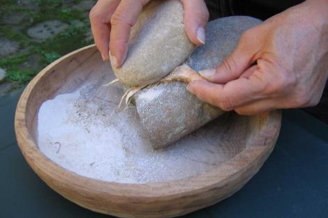 Producción experimental de harina de espadaña. | Fotos: Anna Revedin.