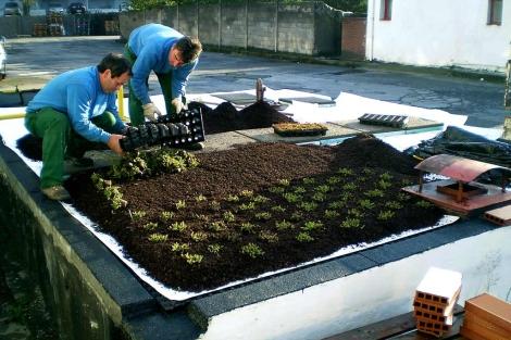 Dos técnicos cultivan plantas sobre las placas asfálticas. | El Mundo