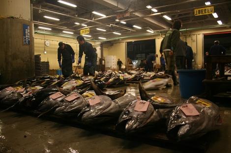 Atunes en el Mercado de pescado de Tokio. | Álvaro Carvajal