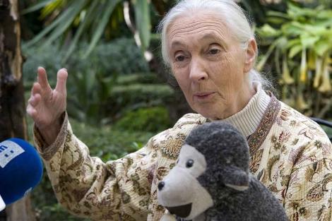 La naturalista Jane Goodall, en el Festiva de Cine en Sevila. | Efe