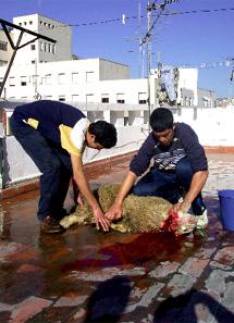 Foto de archivo de dos musulmanes degollando a un cordero en Melilla . Foto: EL MUNDO