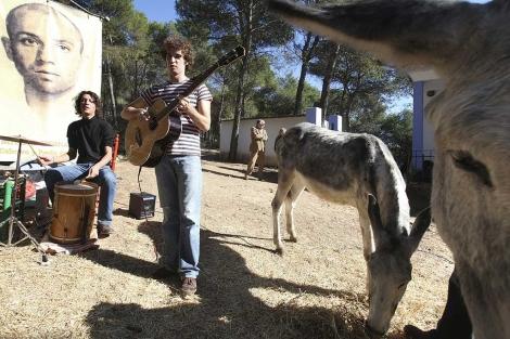 Un momento del concierto ofrecido para asnos y burros en Rute. | Efe