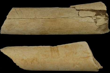 Los dos huesos con marcas de pisoteos.| 'Science'