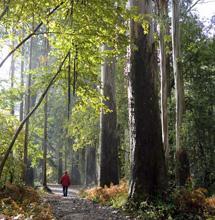 Bosque de Viveiro. | Turgalicia
