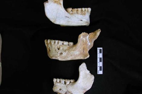 Mandíbulas de neandertales de El Sidrón.|CSIC