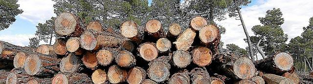 Troncos de madera apilados en un monte de la provincia de Soria. | ELMUNDO.es