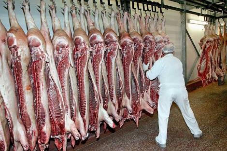 Cerdos en una carnicería cercana a Bonn. | AP
