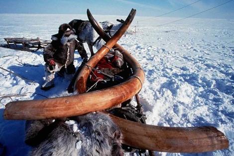 Foto de archivo de un mamut de 10.000 años de antigüedad hallado en Siberia en 1999. | AFP