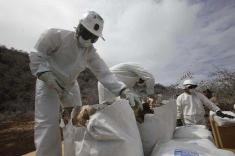Operarios preparan las dosis de raticida. | Efe
