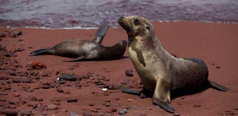 Dos focas en una playa de Rábida. | Efe