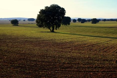 Los eurodiputados reclaman una mayor defensa de la agricultura comunitaria. | J. Eichner
