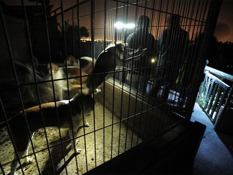 Activistas frente a la jaula en la que estaban encerrados los perros.| Igualdadanimal