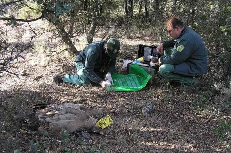 Agentes medioambientales de la Guardia Civil en el escenario de la 'masacre'. | Ical