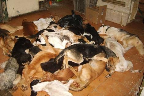 Algunos de los animales muertos hallados en la perrera de Puerto Real. | El Refugio