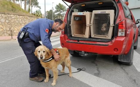 La unidad canina de los bomberos busca a la joven.| Efe