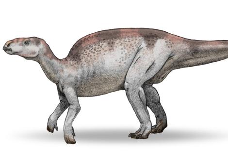 Recreación de un miembro de la familia Hadrosauridae.  EL MUNDO