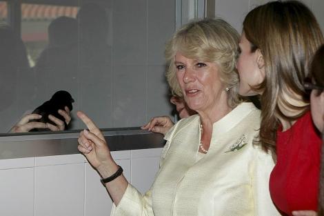 La duquesa de Cornualles y la Princesa Letizia observan a 'Columbus' desde un cristal.   Efe