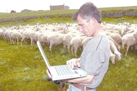 Un ganadero de Bercero (Valladolid) consulta el ordenador junto a su rebaño. | Foto: J. M. Lostau
