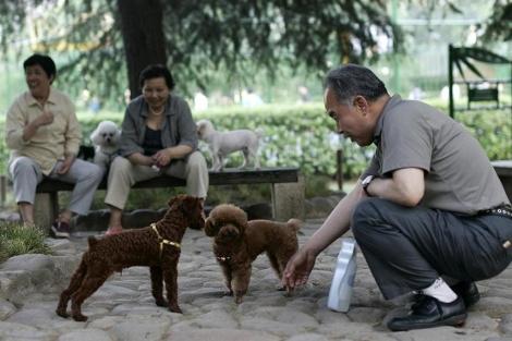 Un hombre observa a dos perros en un parque de Shanghai. | AP